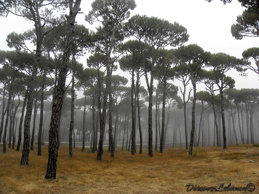 Discover Lebanon Image Gallery  Forests  Bois de Boulogne Lebanon ~ Bois De Boulogne Lebanon